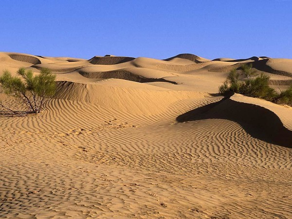 Desert-Landscaping-Pictures