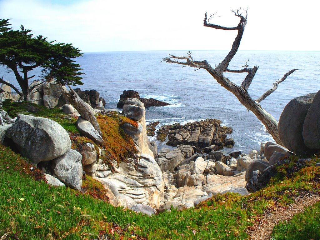 Unforgettable Backdrops on California's 17 Mile Drive
